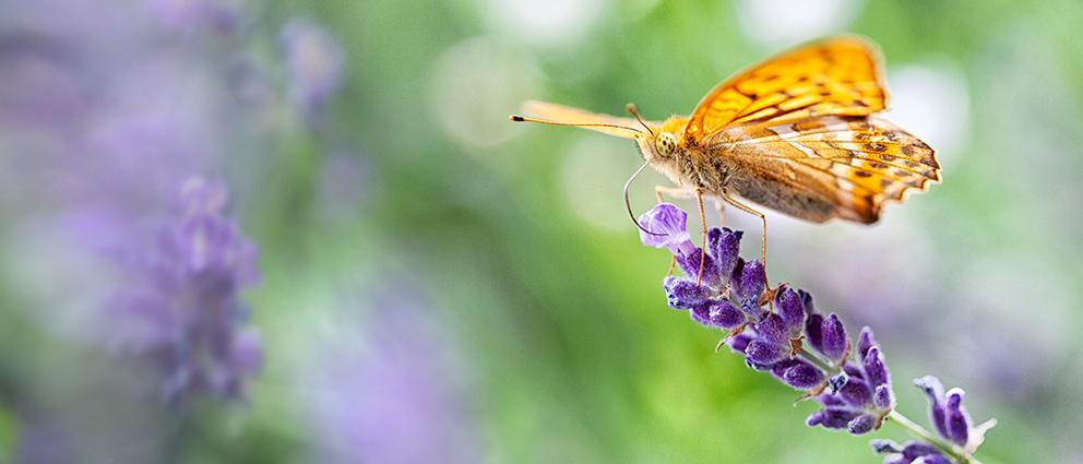 PiaObscura Fotografie Tiere Schmetterling